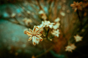 winter_flowers_by_lizzykins97-d4rsryz
