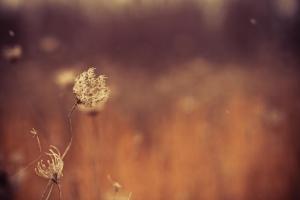 winter-365-dead-plant-Favim.com-473847