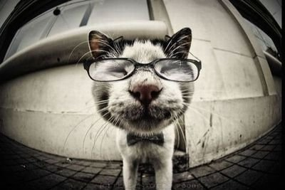 adorable-bow-tie-cat-cute-glasses-Favim.com-141901