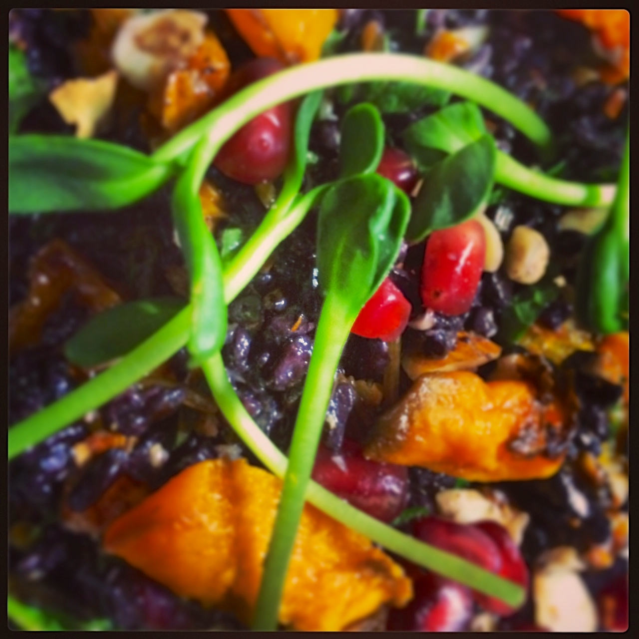 Forbidden Rice Salad w/Butternut Squash, Pomegranate, Mint, Scallion ...