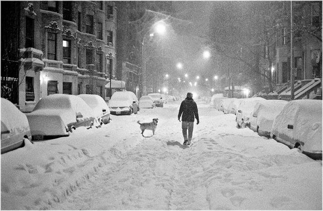 blizzard-pooch-1996-copy
