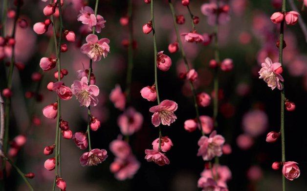 Spring-Pink-Flower-HD