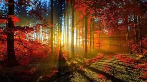 Beautiful-Nature-Hd-Wallpapers-Free-Download-e1396517919982