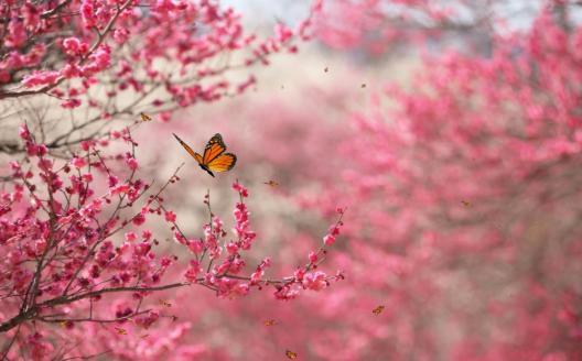 beautiful_nature_screensaver-126111